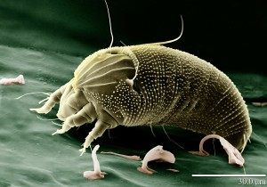 Dust mite effecting seasonal allergies